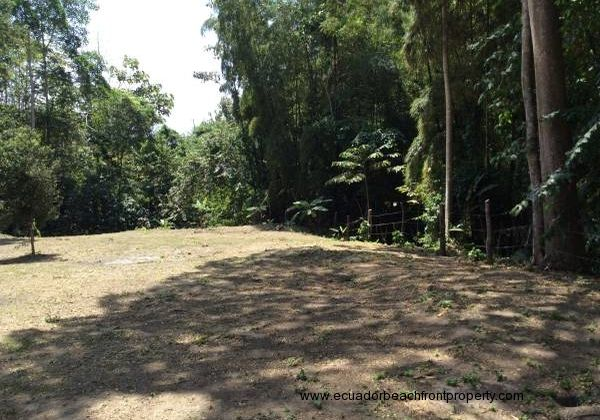 PRICE REDUCED! Mini Cocoa Farm