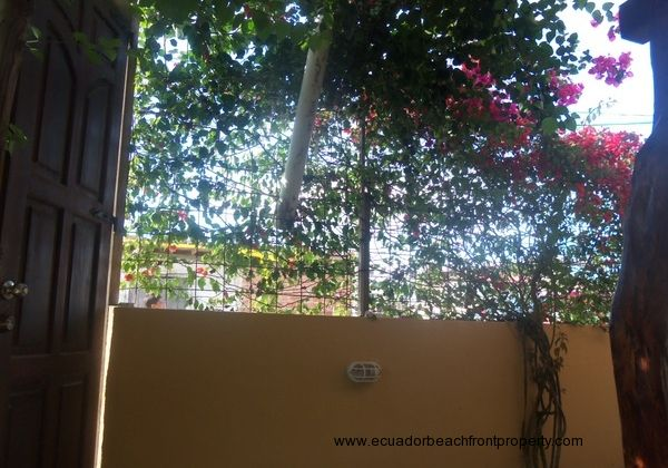 Living fence of bougainvillea, grapes and roses.