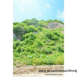 hillside behind home