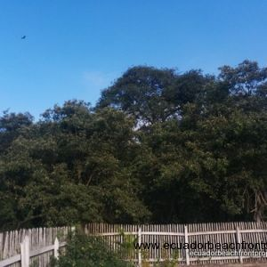 The property backs up to a forested mangrove reserve