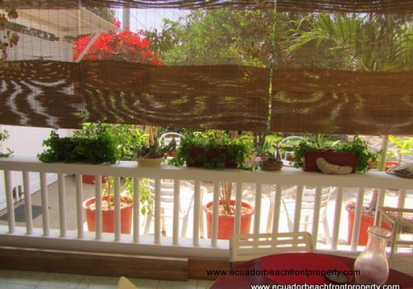 Bamboo blinds provide sun protection