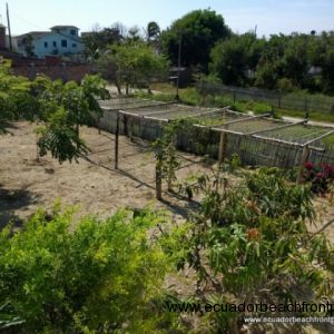 Trellises were recently planted with melons and passion fruit