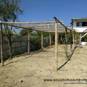 Trellises were recently planted with a melon called