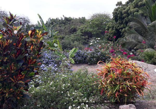 Spacious grounds with tropical landscaping
