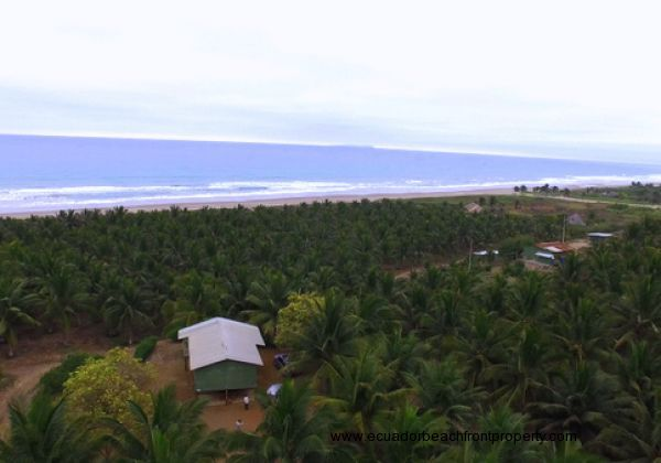44.5 Acre Beachfront Coconut Plantation -
