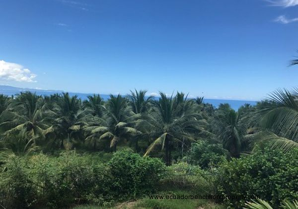 Ecuador Real Estate - Beachfront Coconut Plantation