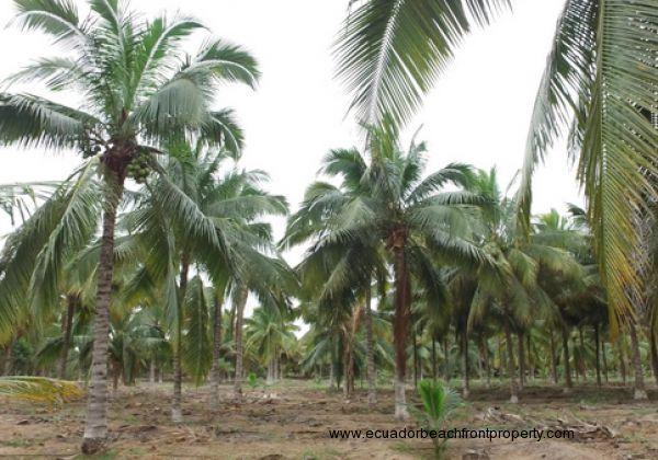Coconutphotos (2)