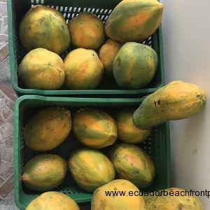 Coconut (10)