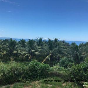 Coconut (3)