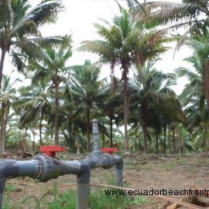 Coconutphotos (3)