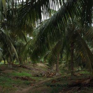 Coconutphotos (4)