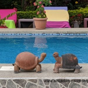 1 - Pool Area (19)