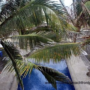 Beachfront pool surrounded by coconut palms